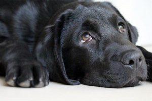Jaką karmę suchą wybrać dla psa?
