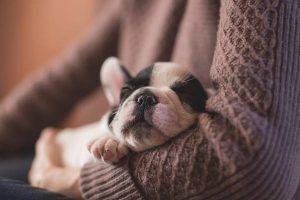 Sklepy z posłaniami dla psów
