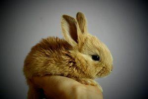 Dobra klatka dla królika