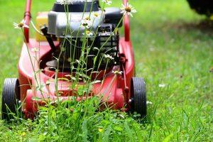 Sprawdzony traktor Wolf Garten