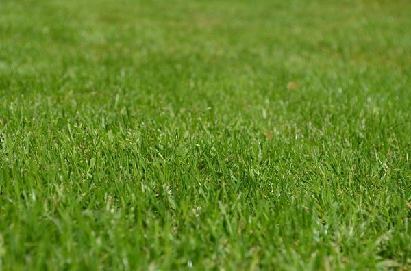 wytrzymała sztuczna trawa na balkon