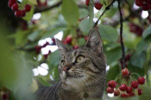 Read more about the article Jak chronić kota przed kleszczami?
